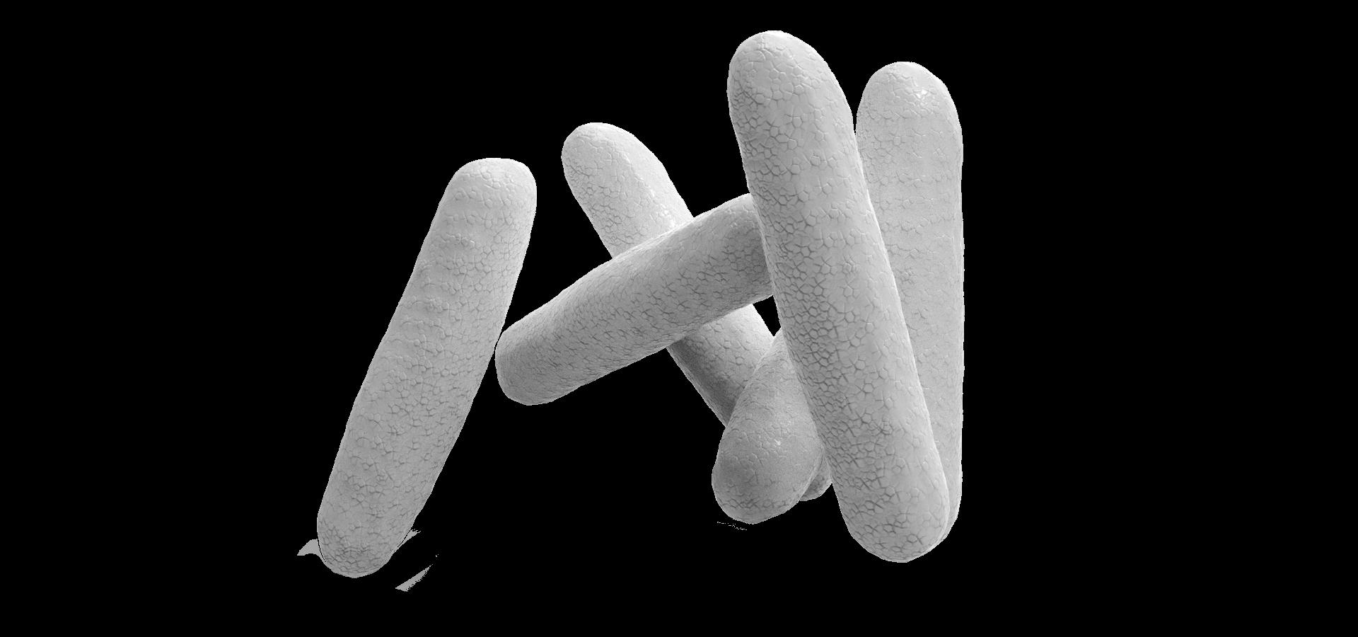 Cyanobacteria synechococcus