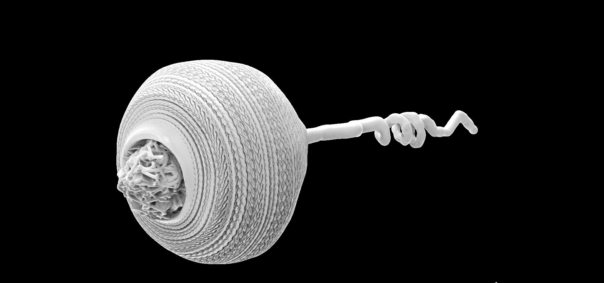 Protozoa vorticella.29