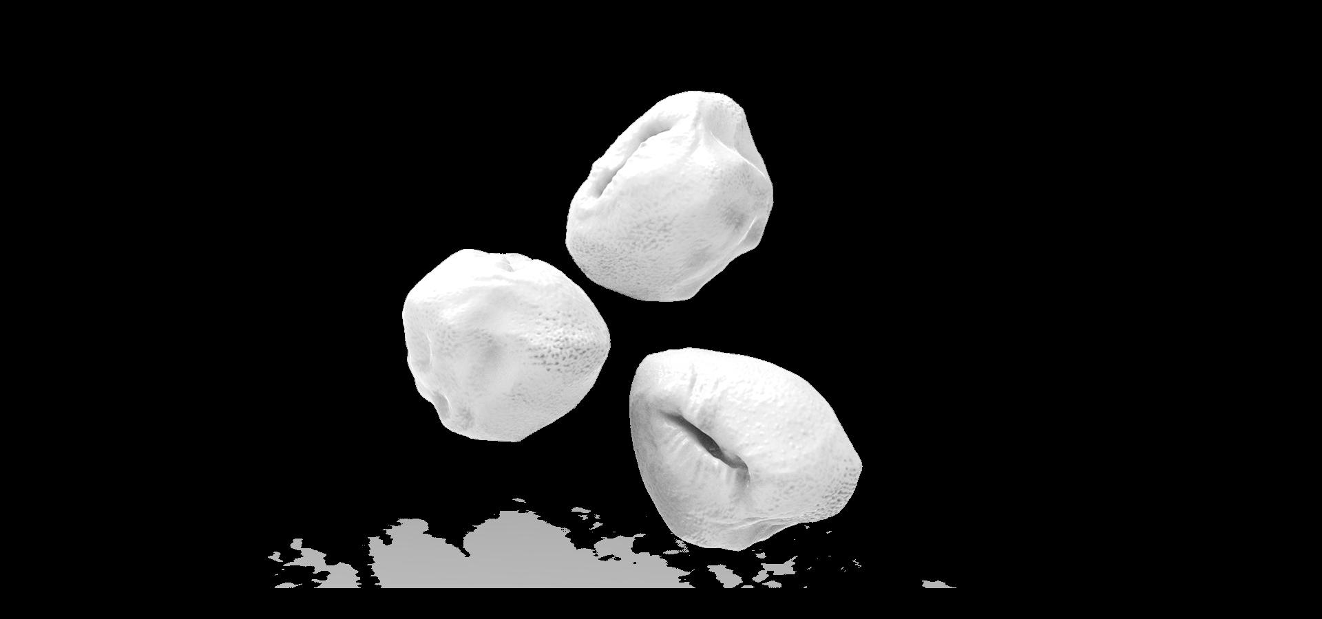 Saccharolobus Solfataricus